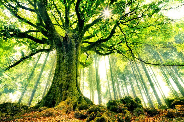 Nos trois missions de vie essentielles int grer et vivre la quintessence le coeur - Arbre sans racine envahissante ...