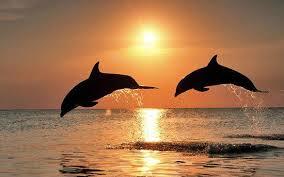 dauphins